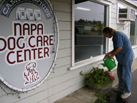 Dan working at the Napa Dog Care Center