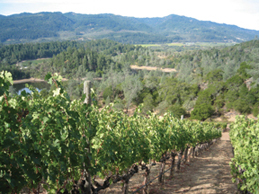 Viader Vineyards